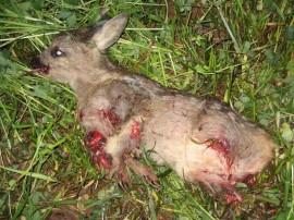 Wildtierhilfe rettet Rehkitze
